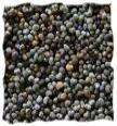 Poppy Seed image